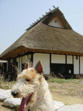 我が家です!(嘘・・・有馬富士公園です)
