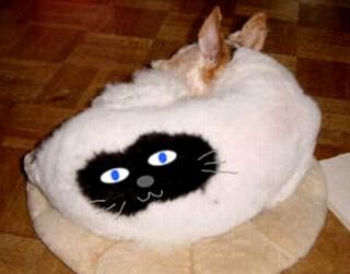 背中の模様が猫っぽいという噂